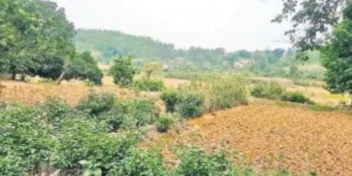 गांव से 10 किलोमीटर दूर इसी जंगल में पांंच नाबालिगों के साथ गैंगरेप हुआ था. (Photo : Prahatkhabar)