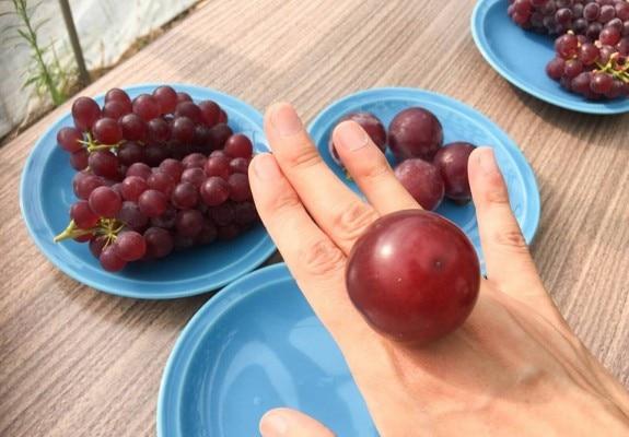एक रूबी रोमन अंगूर का वजन 20 ग्राम के आसपास होता है.