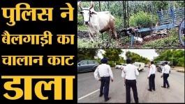 UP पुलिस ने बैलगाड़ी का ही चालान काट दिया!