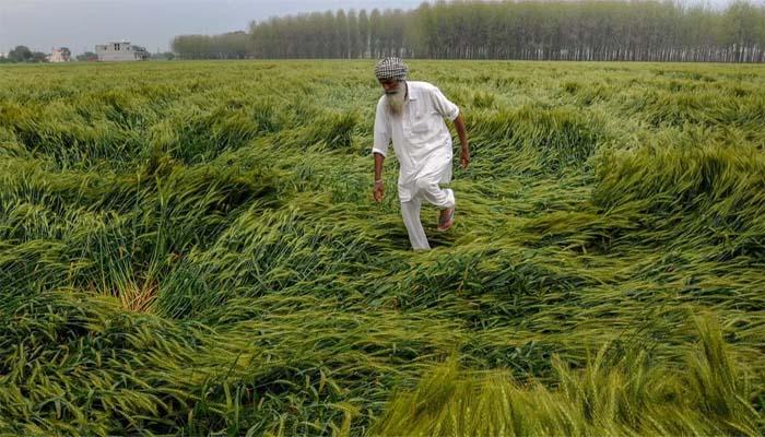 फसल बीमा योजना लागू का मकसद किसानों को आर्थिक मदद देना था.