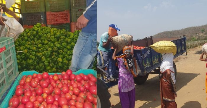 संदीप ने सैकड़ो एकड में सब्जियां उगाई थे लेकिन लॉकडाउन की वजह से उनको नुकसान हो रहा है.