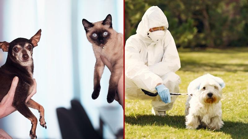 अपने पालतू जानवरों को कोरोना से बचाना है, तो तुरंत ये काम कर लें