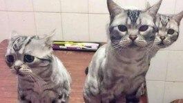बिल्ली के बिस्किट के लिए कोर्ट से मांगी मदद, अदालत ने जो किया, वो दिलोदिमाग खुश कर देगा
