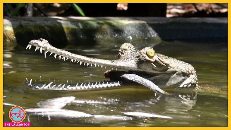लॉकडाउन से इंसान ही परेशान नहीं है, इन जानवरों की कहानी भी सुनिए