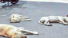 कुत्तों ने बकरी को काटा तो बकरीवाले ने पूरे गांव के कुत्तों से बदला ले लिया