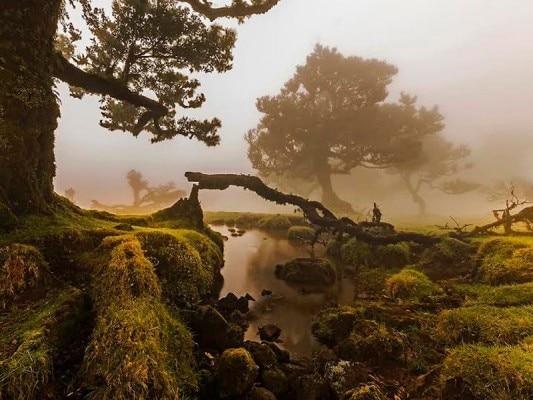 lawrel-forest