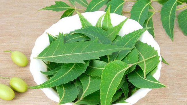 chew the neem leaves