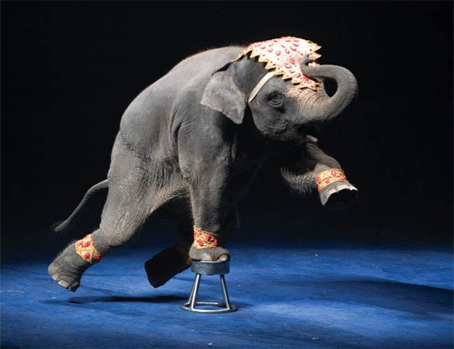 Animals free from circus performances