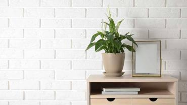 Instead of buying a curio, liven up a lonely spot with a houseplant. (Photo: indiapicture)