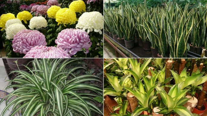 5 Plants That Will Help You Fight Against Indoor Pollution