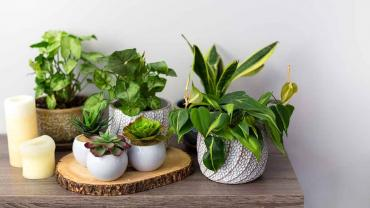 Best Indoor Plants For A Healthy Home