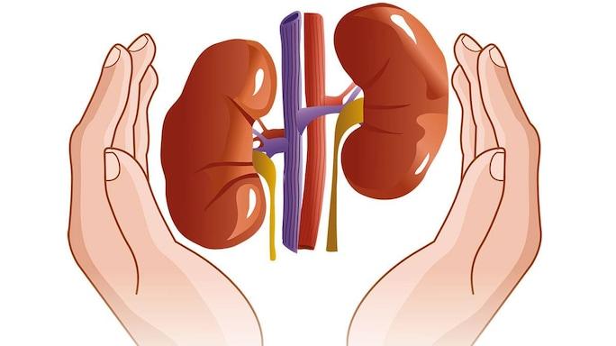 Keep Your Kidneys Healthy