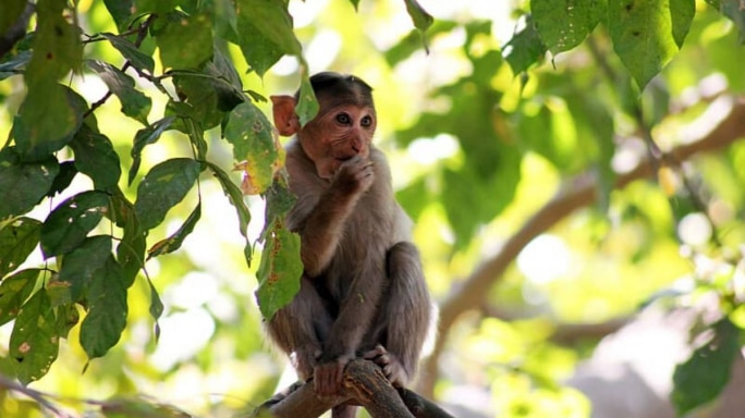 Strange Simian Behaviour, Unsolicited Marital Advice And More