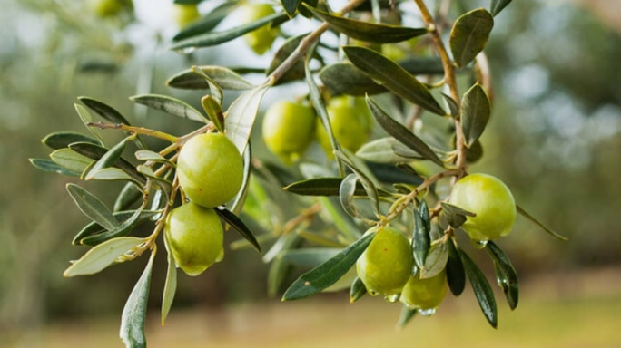Why You Should Make Olives A Part Of Your Diet