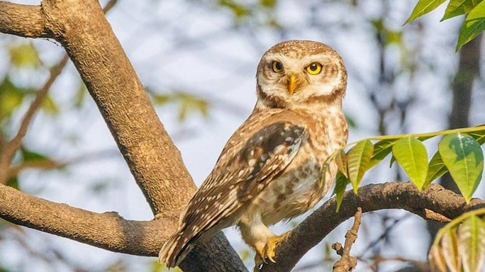 A Police Officer Goes Beyond The Call Of Duty And Two Friends Rescue A Spotted Owlet