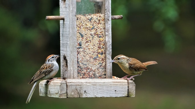 Get A Feeder, Get Closer To Birds