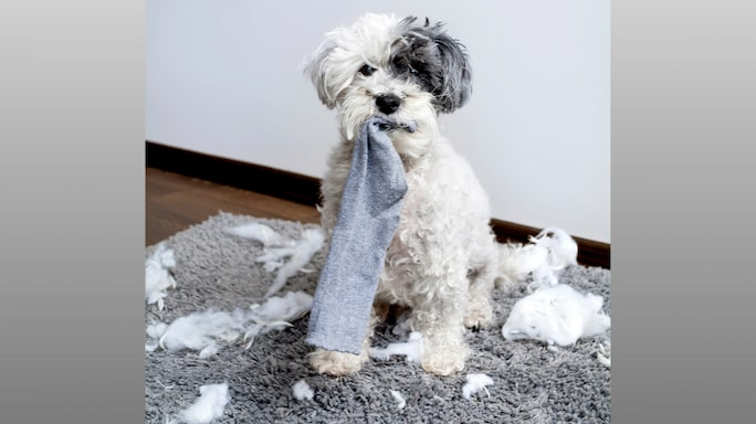 Common Pet Blunders