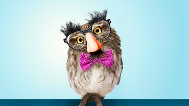 """E. B. White once wrote, """"Humour can be dissected, as a frog can, but the thing dies in the process."""" That might not be true after all. Photo credit: Matthew Cohen (glasses), Eric Isselee/Shutterstock (owl)"""