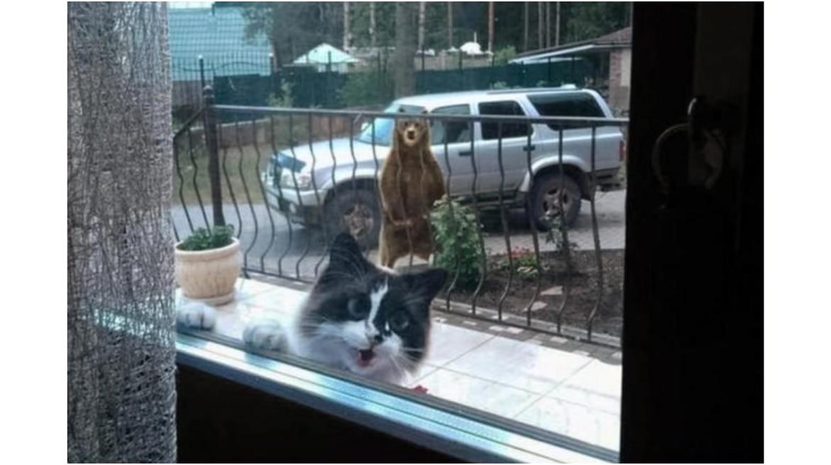 cat-vs-bear_102119041142.png